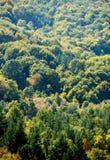 秋天美丽的结构树 秋天横向 免版税库存照片