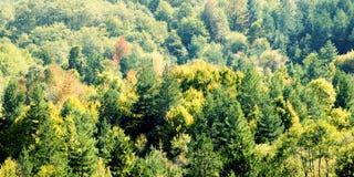 秋天美丽的结构树 秋天横向 图库摄影