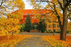 秋天美丽的结构树 图库摄影