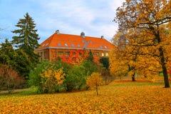 秋天美丽的结构树 库存照片