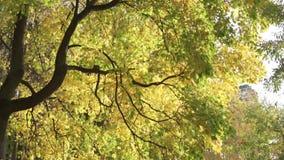 秋天美丽的结构树 股票录像