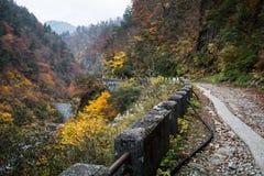 秋天美丽的道路 库存照片