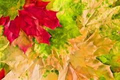 秋天美丽的颜色叶子槭树 免版税库存图片
