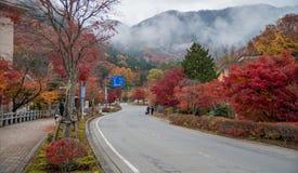 秋天美丽的颜色叶子沿路的bothside晒干在Kawaguchiko 图库摄影