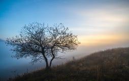 秋天美丽的结构树 免版税图库摄影