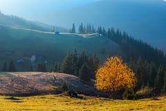 秋天美丽的结构树 免版税库存图片