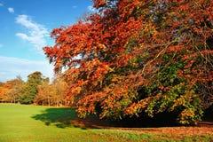 秋天美好的场面 库存照片