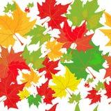 秋天美好的收藏五颜六色的叶子 免版税库存照片
