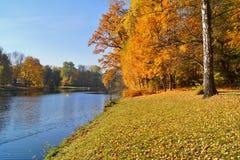 秋天美好的横向 池塘在秋天在城市公园 库存照片