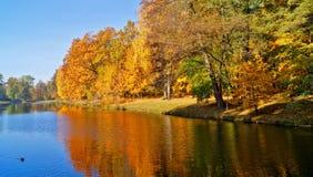 秋天美好的横向 池塘在秋天在城市公园 免版税库存图片