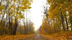 秋天美好的横向 照相机移动到左边 股票视频