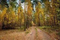 秋天美好的横向 路通过秋天混杂的森林 免版税库存照片