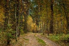 秋天美好的横向 路通过秋天混杂的森林 库存照片