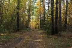 秋天美好的横向 路通过秋天混杂的森林 图库摄影