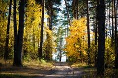 秋天美好的横向 路通过秋天混杂的森林 库存图片