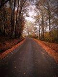 秋天美好的迷离流的森林场面快门慢速对水 库存图片