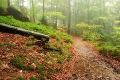 秋天美妙地色的森林 免版税库存照片