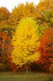 秋天美妙金子的心情 图库摄影