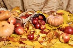 秋天背景、水果和蔬菜在黄色下落的叶子,苹果和南瓜,装饰在乡村模式,被定调子的棕色 图库摄影