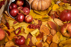 秋天背景、水果和蔬菜在黄色下落的叶子,苹果和南瓜,装饰在乡村模式,被定调子的棕色 库存图片