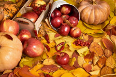 秋天背景、水果和蔬菜在黄色下落的叶子,苹果和南瓜,装饰在乡村模式,被定调子的棕色 免版税库存照片