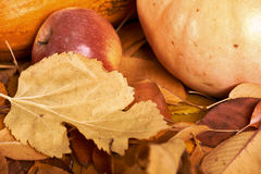 秋天背景、水果和蔬菜在黄色下落的叶子,苹果和南瓜,装饰在乡村模式,黑褐色口气 库存图片