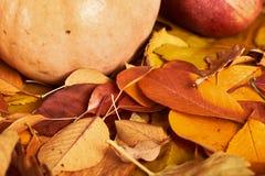 秋天背景、水果和蔬菜在黄色下落的叶子,苹果和南瓜,装饰在乡村模式,黑褐色口气 免版税库存图片