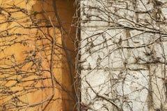 秋天背景上升的工厂纹理墙壁 免版税库存照片