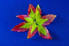 秋天背景与叶子和和蓝色上 免版税库存照片