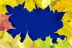 秋天背景与叶子和和蓝色上 免版税库存图片