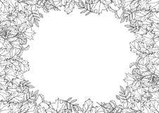 秋天背景与落的叶子的布局框架 海报或卡片 槭树花揪,橡木,山楂树,桦树 橙红黄色 rea 库存例证