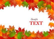 秋天背景五颜六色的叶子向量 免版税库存图片