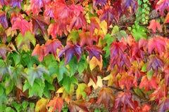 秋天背景五颜六色的叶子 图库摄影