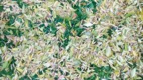 秋天背景五颜六色的叶子 免版税图库摄影