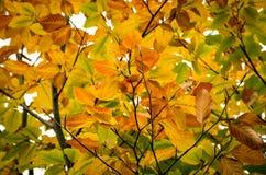 秋天背景五颜六色的叶子 库存图片