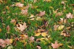 秋天背景五颜六色的叶子 免版税库存图片