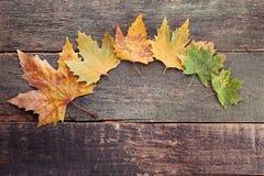 秋天背景五颜六色的干燥叶子叶子 库存照片