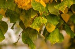 秋天背景五颜六色的干燥叶子叶子 免版税库存照片
