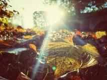 秋天背景五颜六色的干燥叶子叶子 免版税库存图片