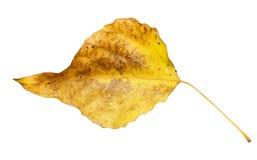 秋天背景例证叶子向量白色 库存图片