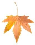 秋天背景例证叶子向量白色 免版税图库摄影