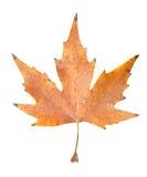 秋天背景例证叶子向量白色 免版税库存照片