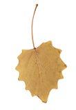 秋天背景例证叶子向量白色 库存照片