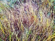 秋天背景关闭草本质 杂草在庭院里,自然退色 库存图片
