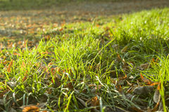 秋天背景关闭草本质 库存图片
