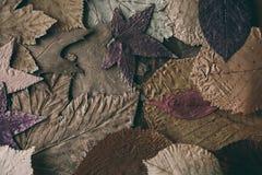 秋天背景划分为的叶子 设计的五颜六色的叶子背景和纹理 关闭秋叶看法作为背景 库存图片