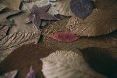 秋天背景划分为的叶子 设计的五颜六色的叶子背景和纹理 关闭秋叶看法作为背景 免版税库存图片