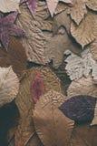 秋天背景划分为的叶子 设计的五颜六色的叶子背景和纹理 关闭秋叶看法作为背景 免版税库存照片