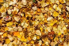 秋天背景叶子纹理 库存图片