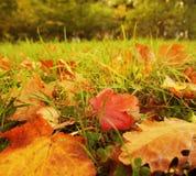 秋天背景叶子 库存图片